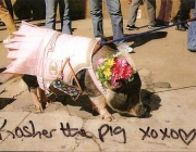 Kosher-the-Pig